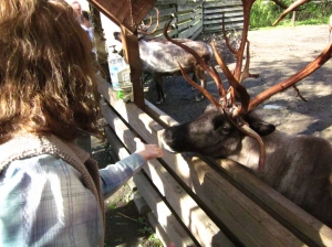 P. Rickrode feeding a eindeer at Ketchikan, Alaska. Photo by C. Rickrode 2014.