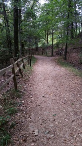 Path in the woods. Photo by P. Rickrode, August 2015.