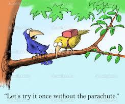 Try it birds