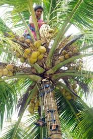 person in palm tree