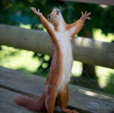 hallelujah squirrel
