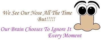see nose meme
