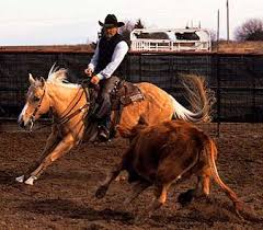 quarter horse in action